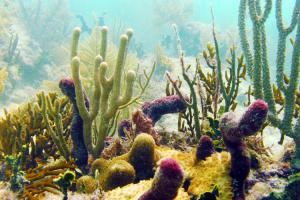 CC_Reef_05