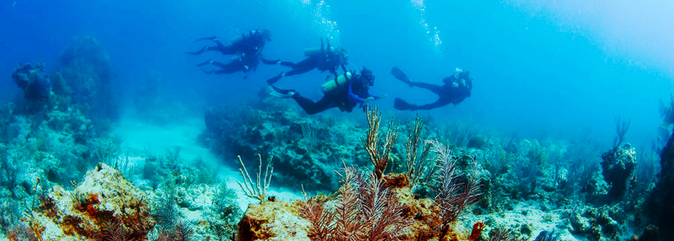 CC_banner_openwater